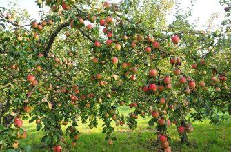 apple 693971 1280