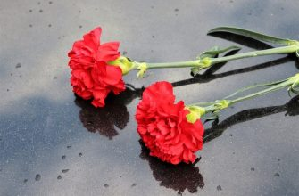two red carnations 4176708 960 720
