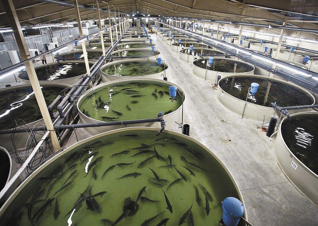 iz rybolovov v akvafermery